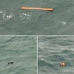 لاپتہ مسافر طیارے کی تلاش کرنے والی ٹیم کے طیاروں کو انڈونیشیا کے جزیرے بورنیو کے قریب بحیر جاوا میں کئی اشیا تیرتی ہوئی نظر آئی ہیں