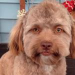 انسانی چہرے سے مشابہت رکھنے والے پالتو کتے یوگی کی تصاویر