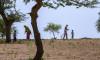 اس صدی کے آخر تک دنیا میں غذائی اجناس خاص کر گندم کی شدید قلت ہو جائے گی